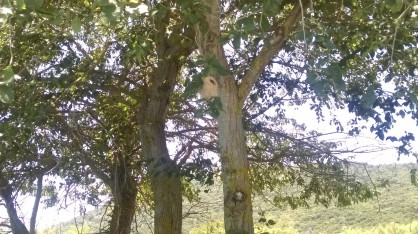 Разходка с корабче при устието на река Ахерондас. На дървото се вижда гнездо на птица, направено така, че да не могат водните зм