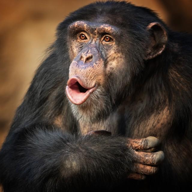 Маймуни тероризират туристически град в Индия